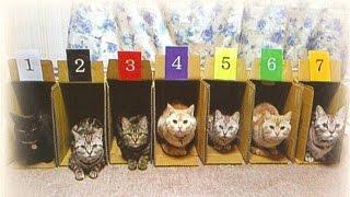 Видео приколы про кошек! Вот это гонки!
