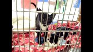 Watch what  kittens do when put back into the cage for the night at Noah