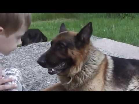 Человек собаке друг м/ф Бобик в гостях у Барбоса