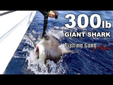 【神動画】300ポンドの人食い巨大サメを仕留めた【沖縄】