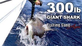 300ポンドの人食い巨大サメを仕留めた【沖縄】 thumbnail