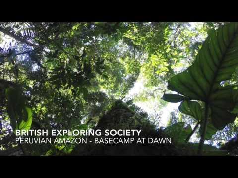 Sounds of the Peruvian Amazon Rainforest - 25 minutes