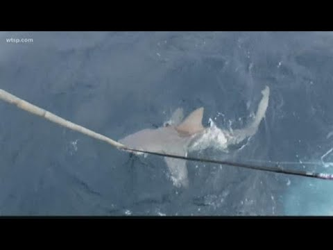 Kevin Campbell - Experts Say Great White Sharks Are Moving To Florida For The Winter
