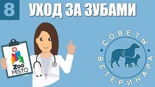 Уход за зубами   Зачем и как правильно ухаживать за зубами животных   Советы Ветеринара