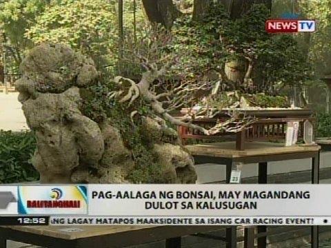 BT: Pag-aalaga ng bonsai, may magandang dulot sa kalusugan