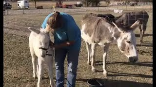 Rescue Donkey About To Give Birth at Horse Rescue | The Dodo LIVE