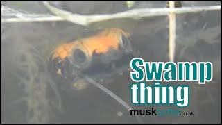 Twist neck swamp