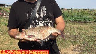 Успешная рыбалка в Самарской области на леща и подлещика.Ловим подлещиков в Самаре.Рыбалка 63 регион