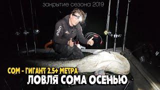 Рыбалка 2019 на сома. Осенняя ловля трофейного сома