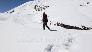 Tramping through snow in the high mountains of Himachal, out to film Snow Leopard