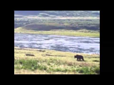 Managing Yellowstone's grizzlies and people