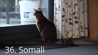 Ultimate Cat Breed Compilation  39 Cat Breeds