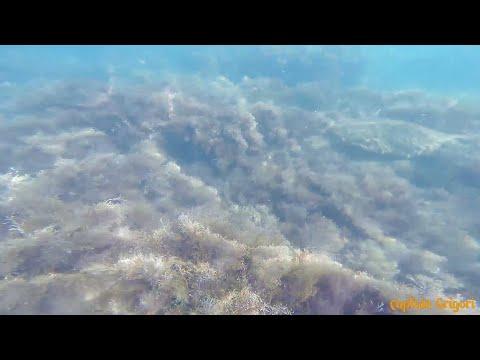 Анапа высокий берег, подводные житель моря и Море плова / Anapa High Coast, And The Sea Of pilaf