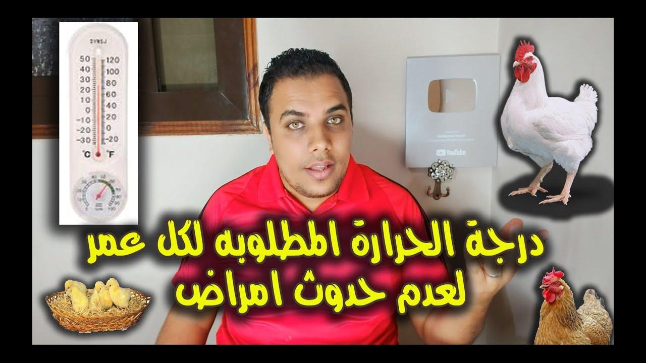 درجة الحرارة المطلوبه لكل عمر لعدم حدوث امراض // عشاق الدواجن