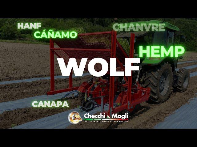CHECCHI & MAGLI - WOLF _ TRAPIANTO CANAPA-HEMP-CHANVRE-CÁÑAMO-HANF
