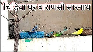 चिड़िया घर वाराणसी ! Deer Park ! Varanasi Zoo ! banaras zoo ! deer park banaras