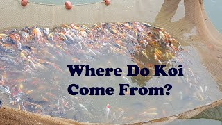 Koi Hatchery Tour - Blue Ridge Koi