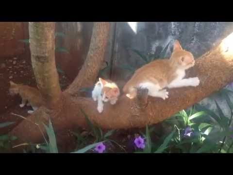 three cute kittens  playing with his brother in a tree