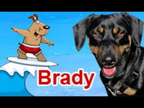 Brady is looking for a foster or a forever home.  Please share.