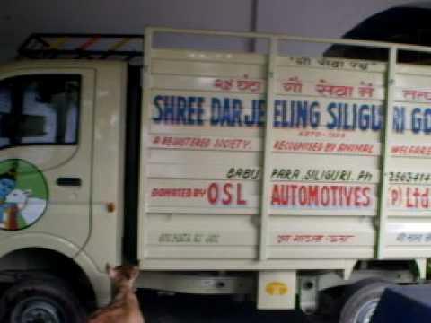 SHREE DARJEELING SILIGURI GOUSALA