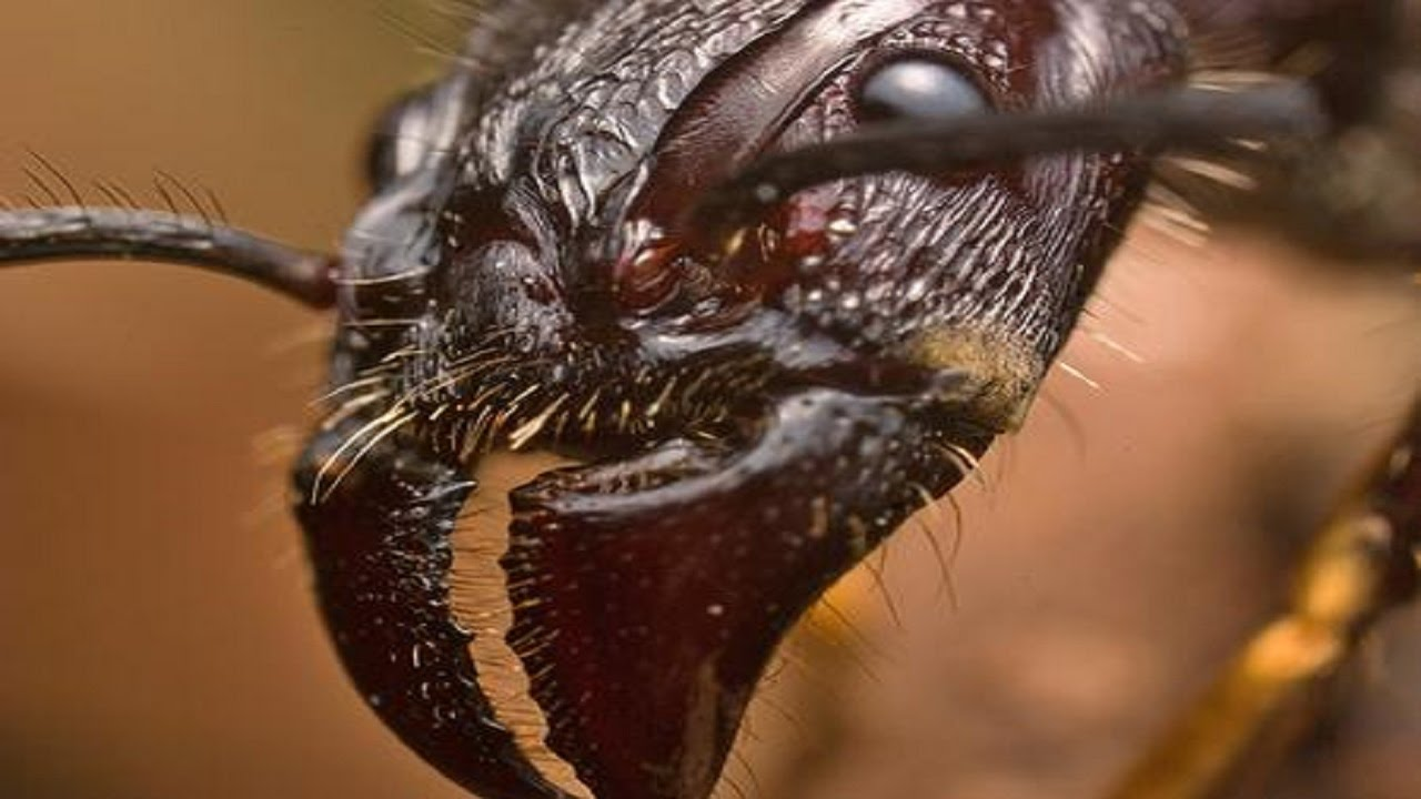 deadliest insect in the world - photo #25