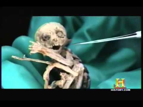 Metepec Creature DNA Results (Original) - YouTube