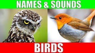 BIRDS Names and Sounds - Learn Bird Species in English
