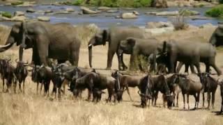 برومو الحلقة الخامسة من السلسلة الوثائقية أيام أفريقية