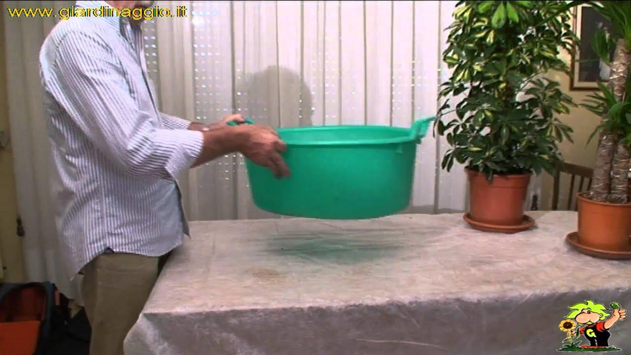come annaffiare le piante da appartamento - YouTube