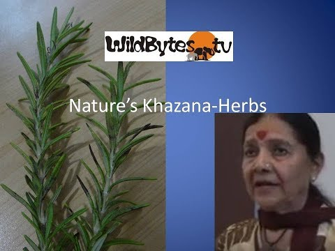 Nature's Khazana-Some tips on HERBS