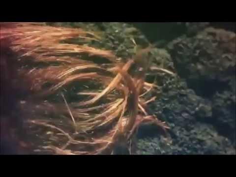 Koupes - Marina Satti - Antonis Kanakis Remix
