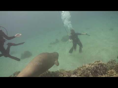 Monk Seal Kiss 2009 Maui Hawaii