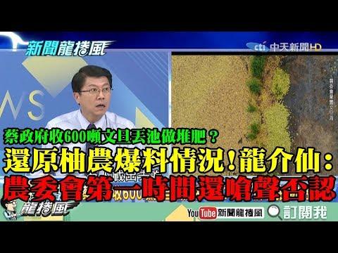 【精彩】蔡政府收購600噸文旦丟池做堆肥? 龍介仙還原柚農爆料情況:農委會第一時間還嗆聲否認!