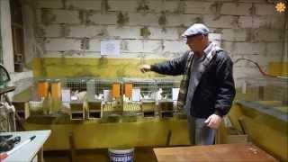 Одноярусные клетки для кроликов против 3х ярусов!(В этом видео я постарался описать преимущество 1 ярусных клеток.. 2514558@mail.ru Одноклассники : www.ok.ru/solnechny.krolik., 2015-05-18T16:54:14.000Z)
