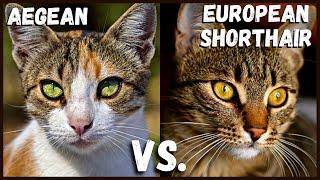 Aegean Cat VS.  European Shorthair Cat