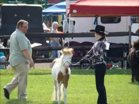 Amber Schaab And Her Magnificent Miniature Horse Mare: Mini Brook's Poly Pure Heart