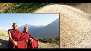 Все вредное выведет рис - Секрет тибетских лам