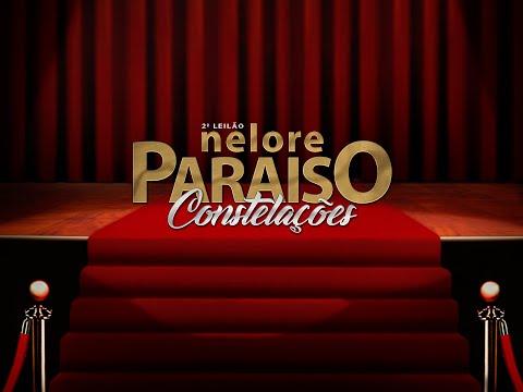 Lote Extra   ESTRELA FIV DO NELORE PARAISO   MRJP 184 Copy