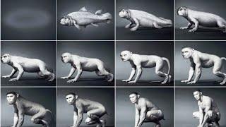 Tóm lược quá trình tiến hóa 550 triệu năm của con người