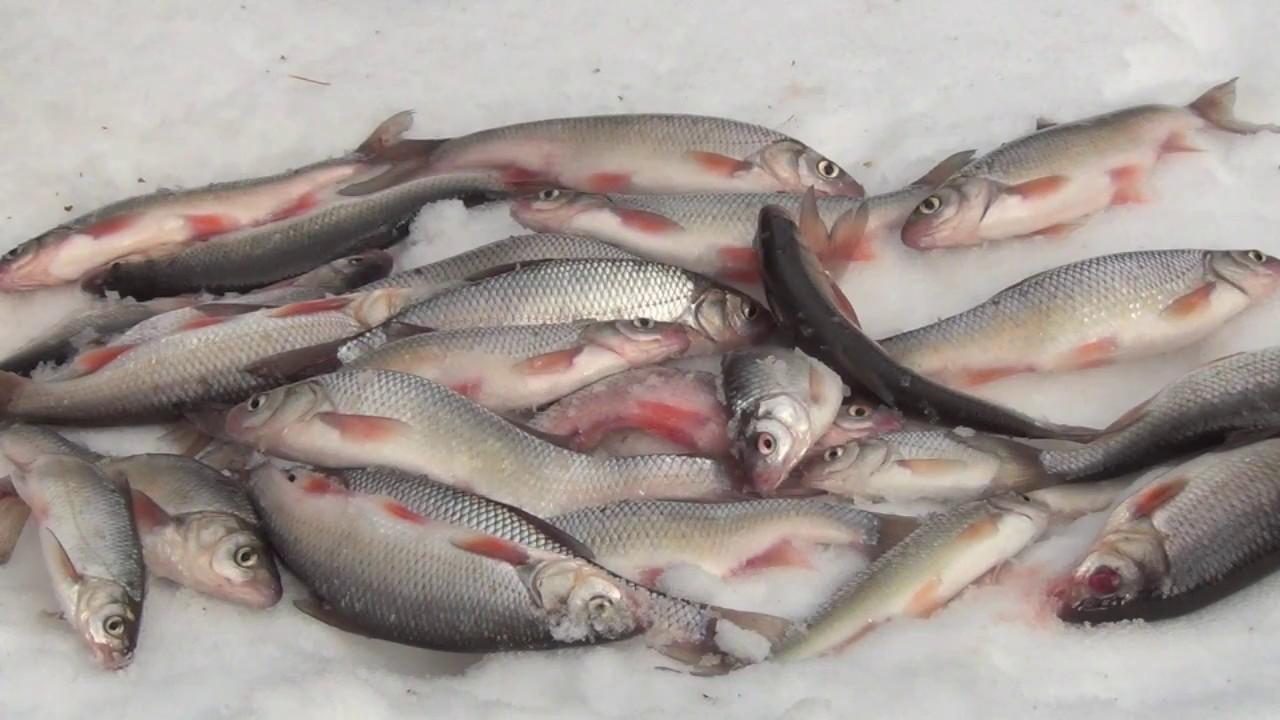 рыбалка на севере видео бесплатно