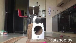 Когтеточки и домики для кошек FOUR CATS