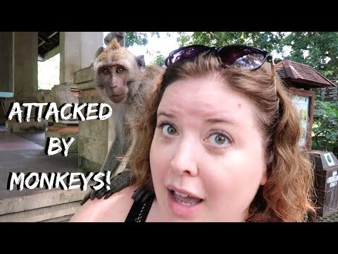 Ubud Bali Monkey Forest | Indonesia Travel Vlog
