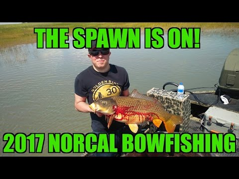 2017 California Bowfishing, The Spawn Is On!!!!!