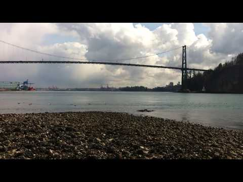 dog beach west Vancouver ocean view Dog Taxi Daycare hotel