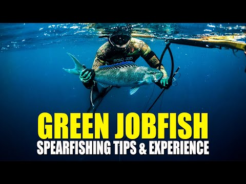 SPEARFISHING TIPS & EXPERIENCE GREEN JOBFISH (UKU)