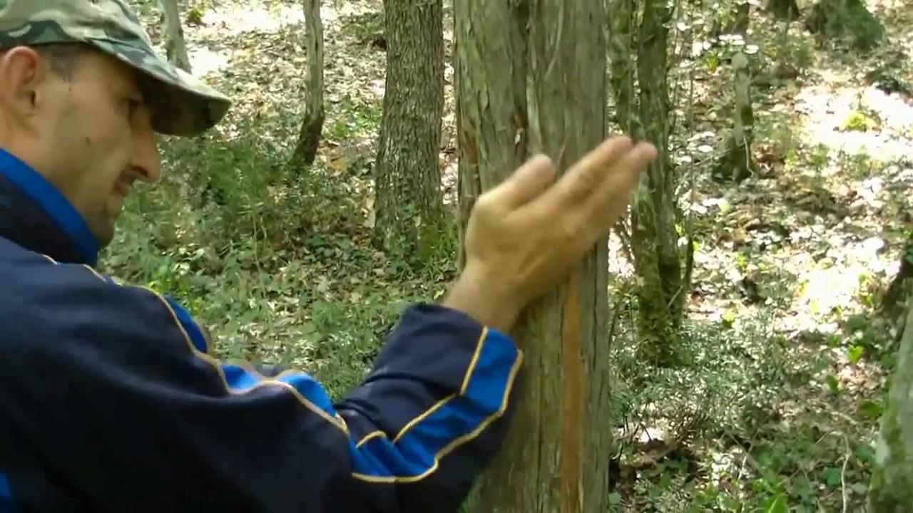 Заднипровский Алексей (Севастополь) - 35 лет в спорте