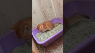 Котята приучатся к лотку