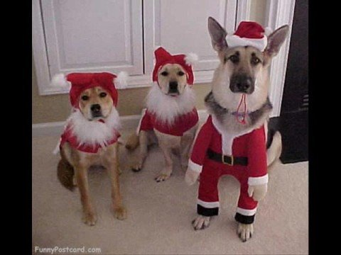 Christmas Song With Dogs Barking