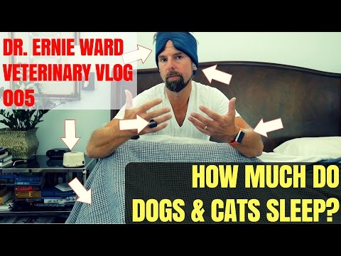 How Much Do Dogs And Cats Sleep? Veterinary Vlog 005 - Dr. Ernie Ward