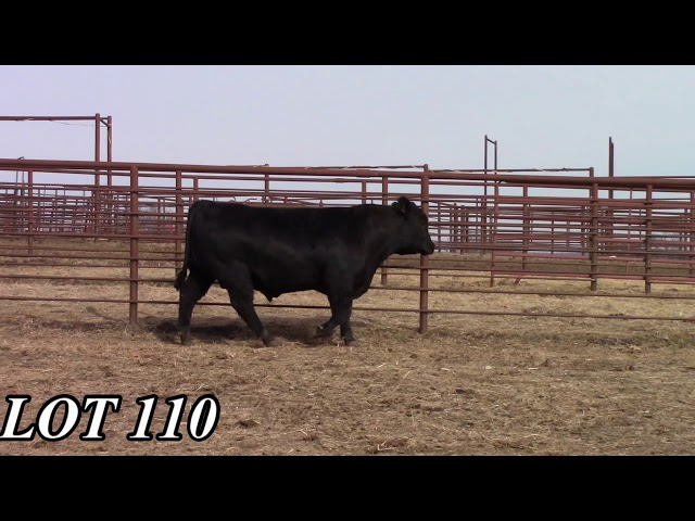 Mead Angus Farms Lot 110